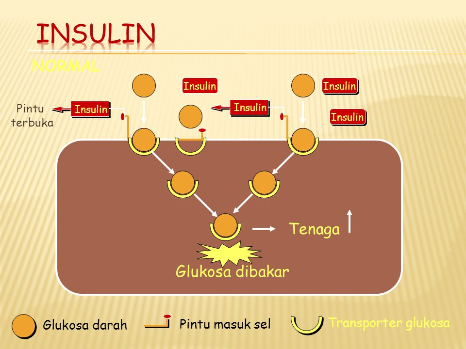 Insulin NORMAL Tenaga Glukosa dibakar Transporter glukosa