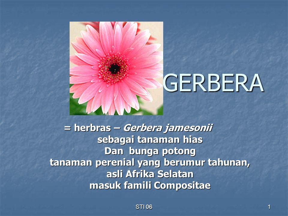 GERBERA = herbras – Gerbera jamesonii sebagai tanaman hias