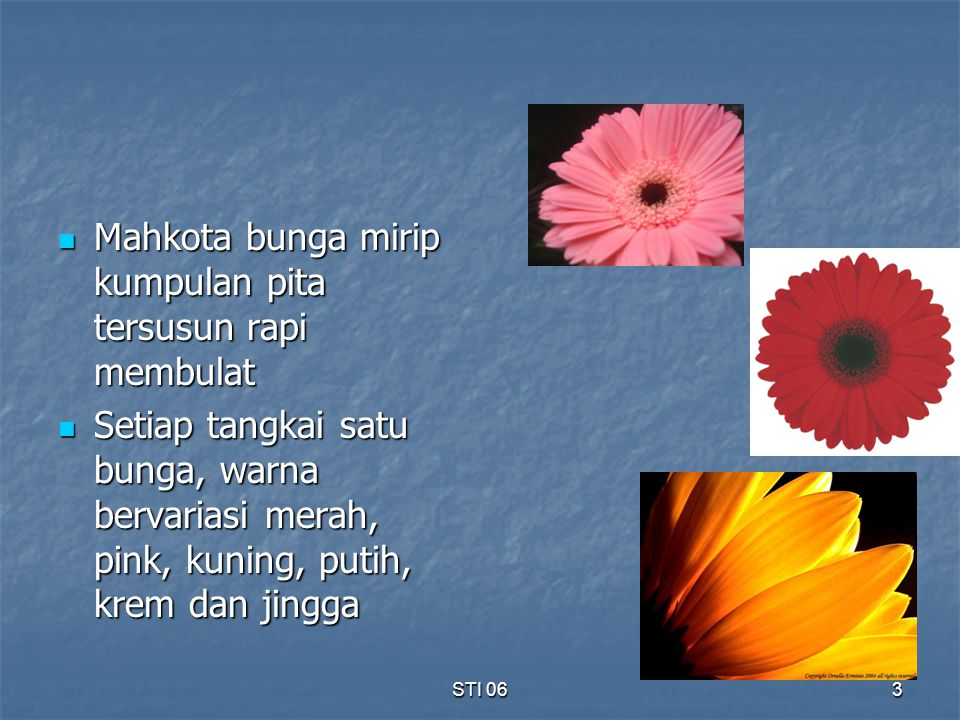 Mahkota bunga mirip kumpulan pita tersusun rapi membulat