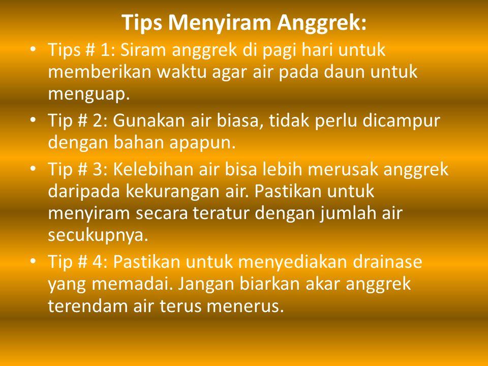 Tips Menyiram Anggrek: