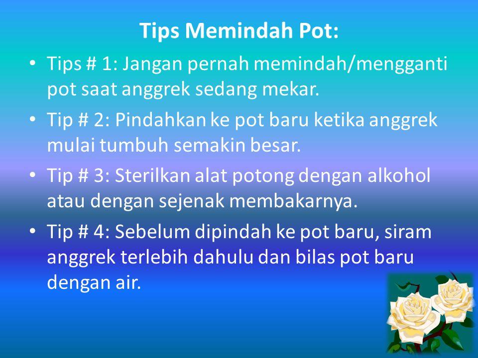 Tips Memindah Pot: Tips # 1: Jangan pernah memindah/mengganti pot saat anggrek sedang mekar.