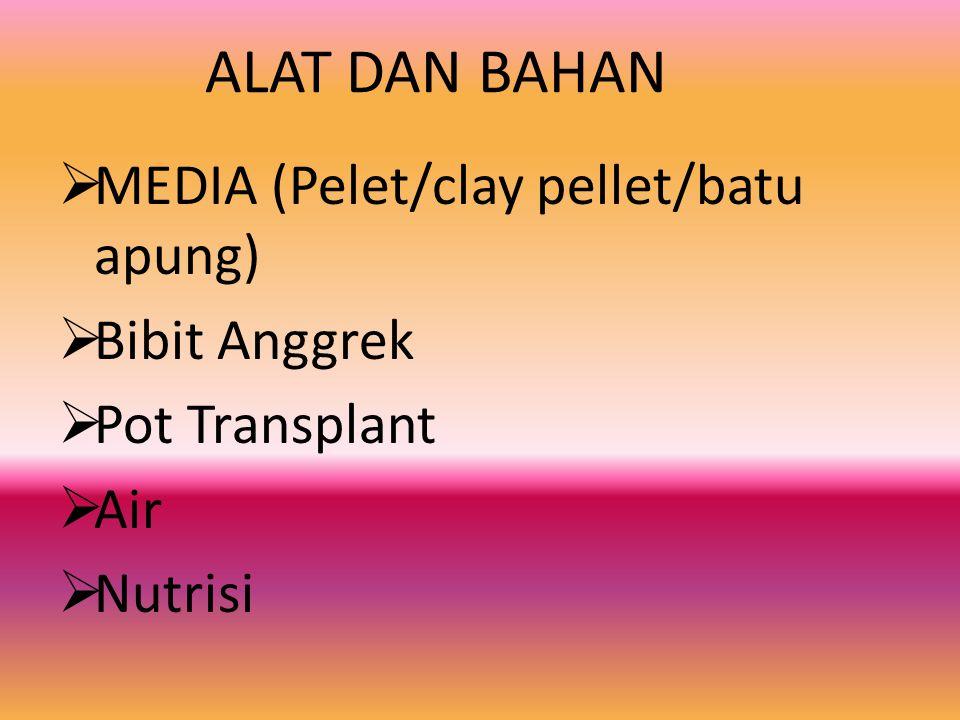 ALAT DAN BAHAN MEDIA (Pelet/clay pellet/batu apung) Bibit Anggrek