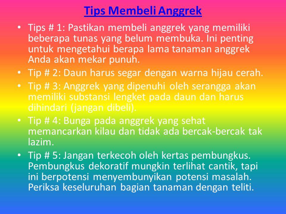Tips Membeli Anggrek