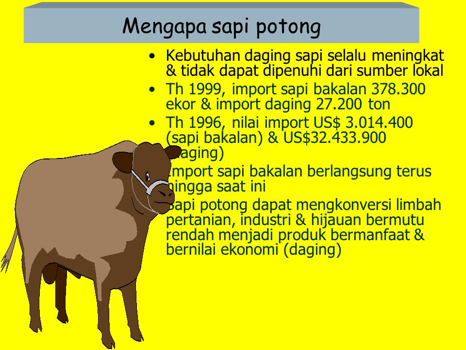 Mengapa sapi potong Kebutuhan daging sapi selalu meningkat & tidak dapat dipenuhi dari sumber lokal.