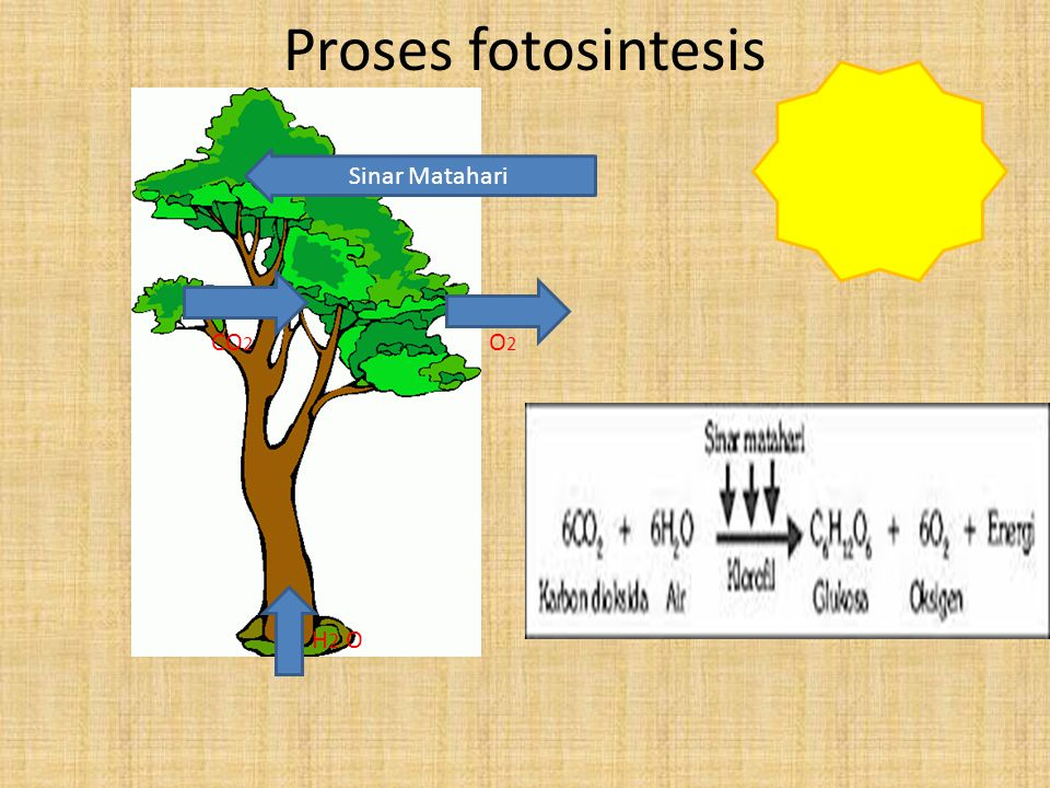 Proses fotosintesis Sinar Matahari CO2 O2 H2 O
