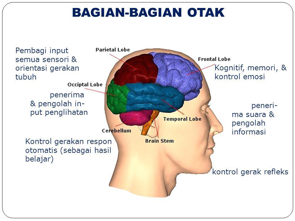 BAGIAN-BAGIAN OTAK Pembagi input semua sensori & orientasi gerakan tubuh. Kognitif, memori, & kontrol emosi.
