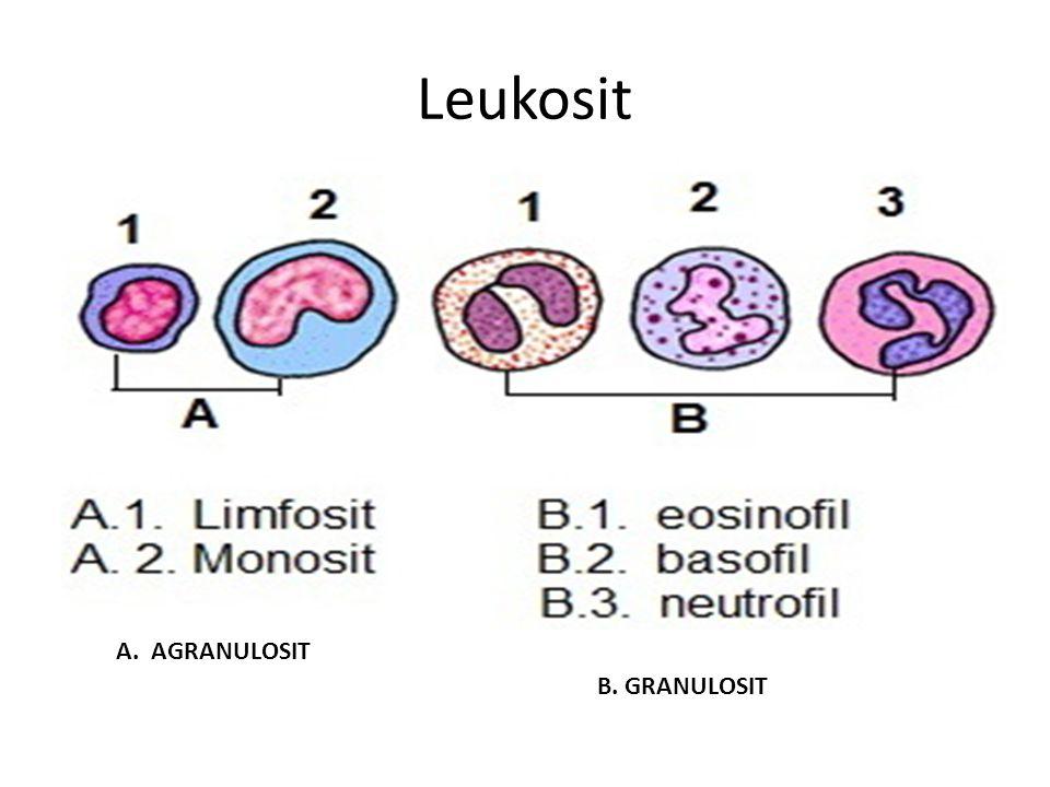 Leukosit A. AGRANULOSIT B. GRANULOSIT
