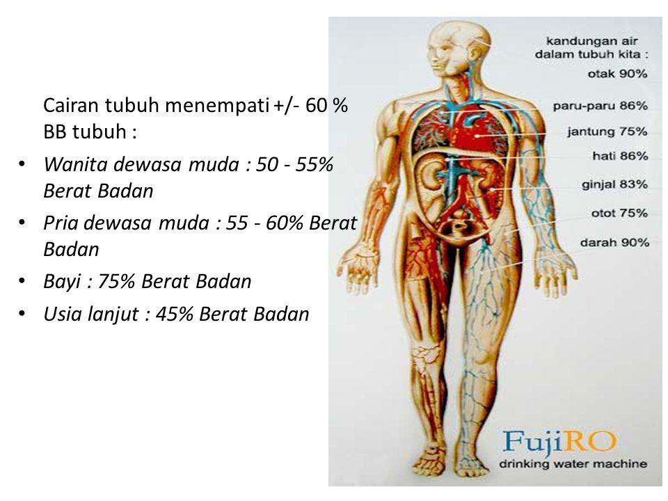 Cairan tubuh menempati +/- 60 % BB tubuh :