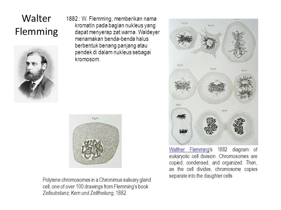 1882 : W. Flemming, memberikan nama kromatin pada bagian nukleus yang dapat menyerap zat warna. Waldeyer menamakan benda-benda halus berbentuk benang panjang atau pendek di dalam nukleus sebagai kromosom.