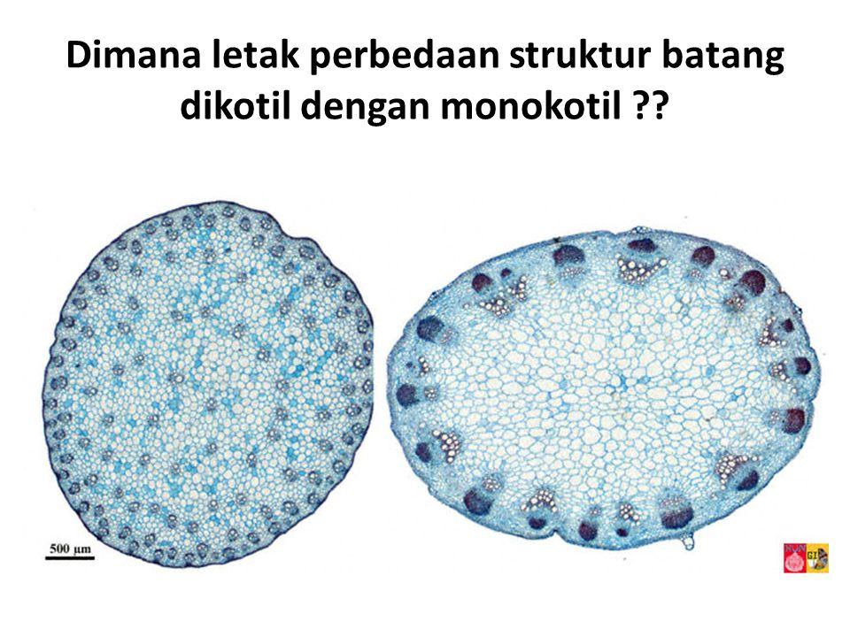 Dimana letak perbedaan struktur batang dikotil dengan monokotil
