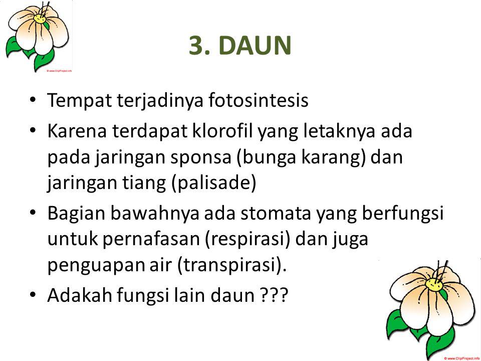 3. DAUN Tempat terjadinya fotosintesis