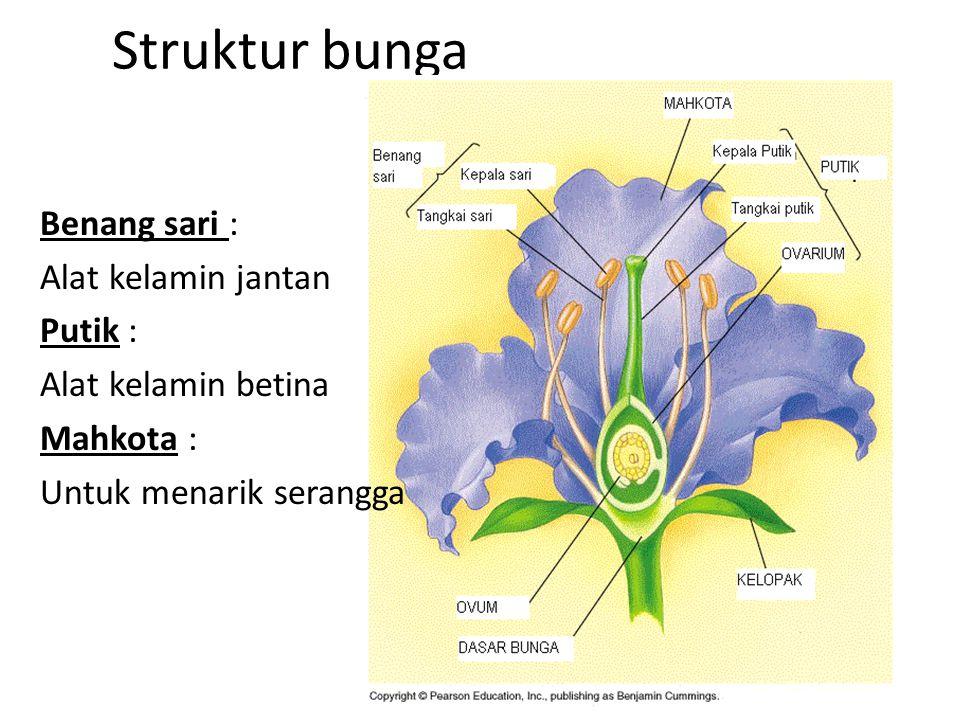 Struktur bunga Benang sari : Alat kelamin jantan Putik : Alat kelamin betina Mahkota : Untuk menarik serangga