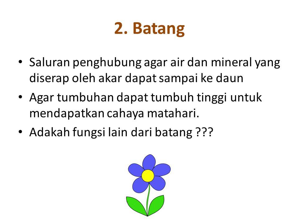2. Batang Saluran penghubung agar air dan mineral yang diserap oleh akar dapat sampai ke daun.