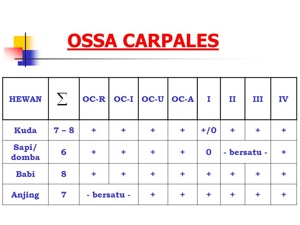 OSSA CARPALES HEWAN OC-R OC-I OC-U OC-A I II III IV Kuda 7 – 8 + +/0