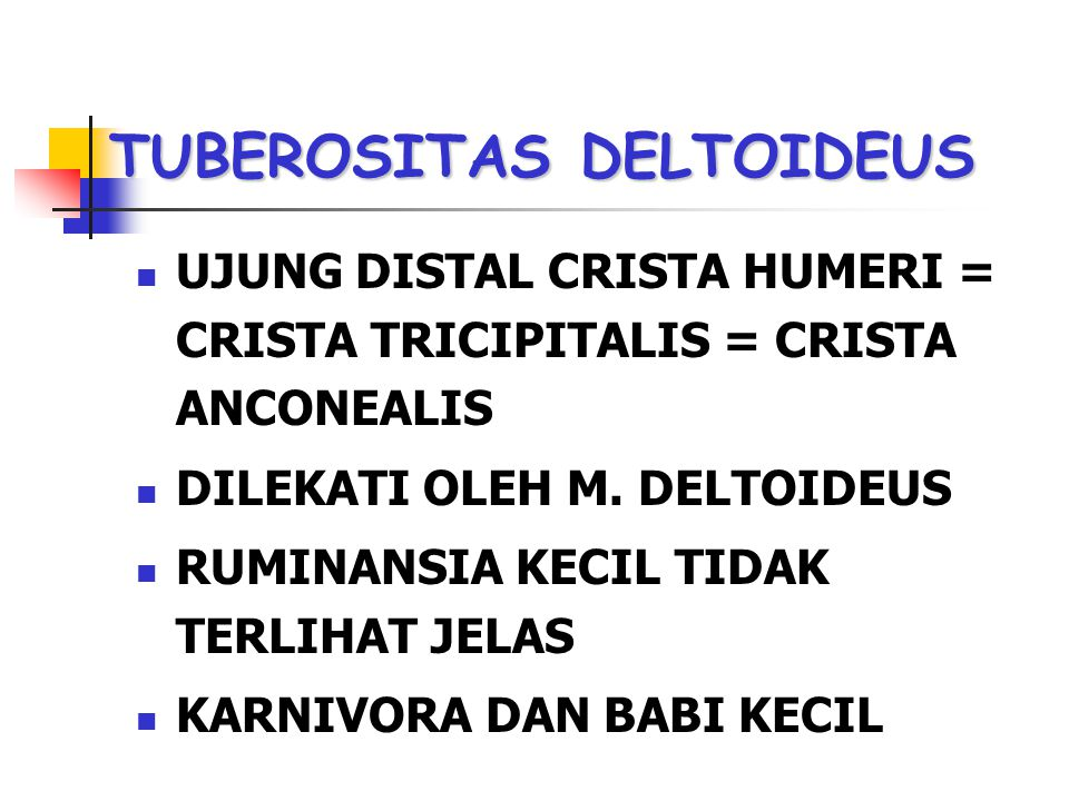 TUBEROSITAS DELTOIDEUS