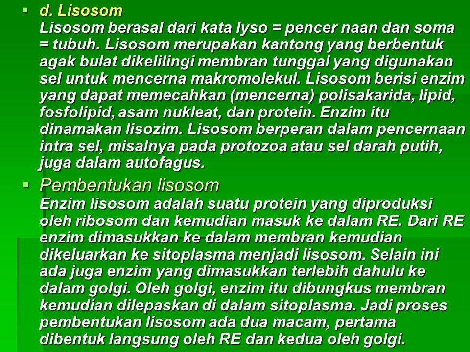 d. Lisosom Lisosom berasal dari kata lyso = pencer naan dan soma = tubuh. Lisosom merupakan kantong yang berbentuk agak bulat dikelilingi membran tunggal yang digunakan sel untuk mencerna makromolekul. Lisosom berisi enzim yang dapat memecahkan (mencerna) polisakarida, lipid, fosfolipid, asam nukleat, dan protein. Enzim itu dinamakan lisozim. Lisosom berperan dalam pencernaan intra sel, misalnya pada protozoa atau sel darah putih, juga dalam autofagus.
