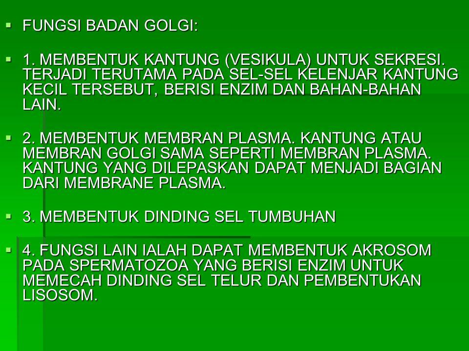 FUNGSI BADAN GOLGI: