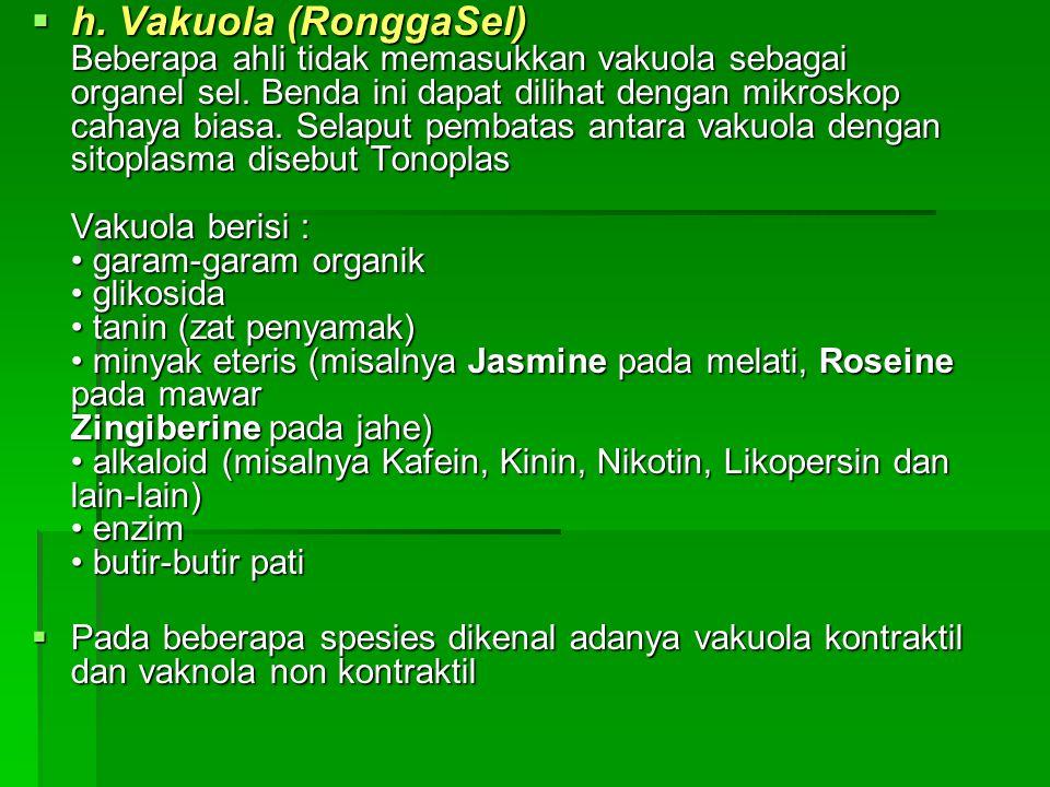 h. Vakuola (RonggaSel) Beberapa ahli tidak memasukkan vakuola sebagai organel sel. Benda ini dapat dilihat dengan mikroskop cahaya biasa. Selaput pembatas antara vakuola dengan sitoplasma disebut Tonoplas Vakuola berisi : • garam-garam organik • glikosida • tanin (zat penyamak) • minyak eteris (misalnya Jasmine pada melati, Roseine pada mawar Zingiberine pada jahe) • alkaloid (misalnya Kafein, Kinin, Nikotin, Likopersin dan lain-lain) • enzim • butir-butir pati