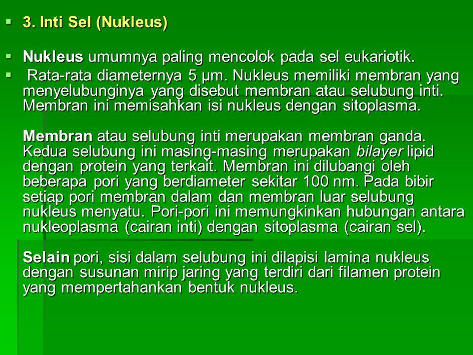 3. Inti Sel (Nukleus) Nukleus umumnya paling mencolok pada sel eukariotik.