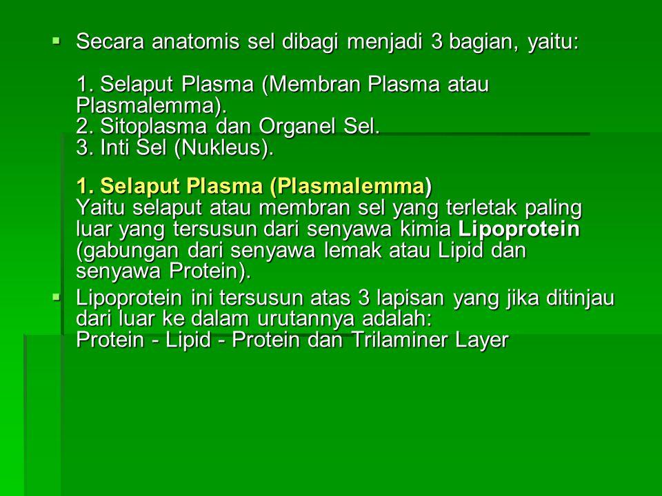 Secara anatomis sel dibagi menjadi 3 bagian, yaitu: 1