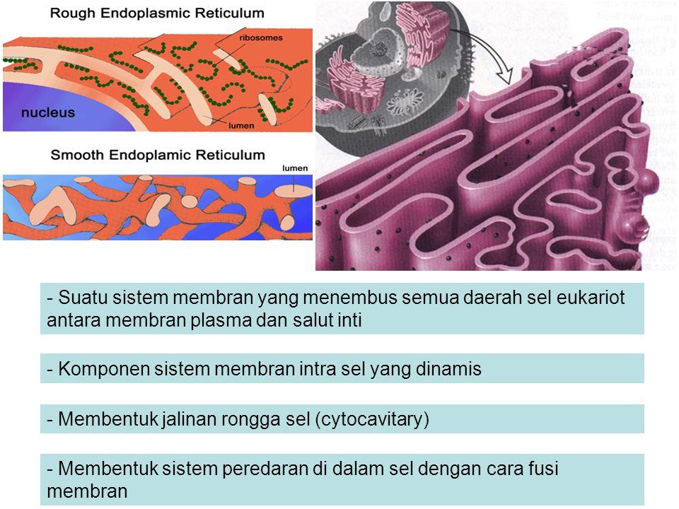 - Suatu sistem membran yang menembus semua daerah sel eukariot antara membran plasma dan salut inti