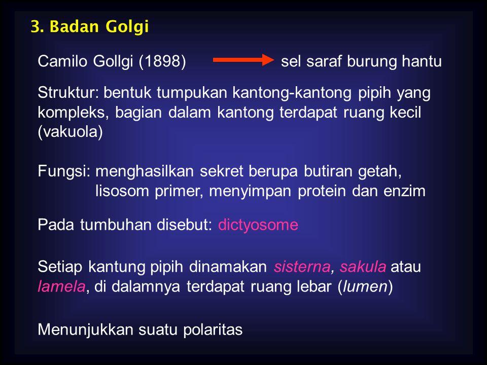 3. Badan Golgi Camilo Gollgi (1898) sel saraf burung hantu.