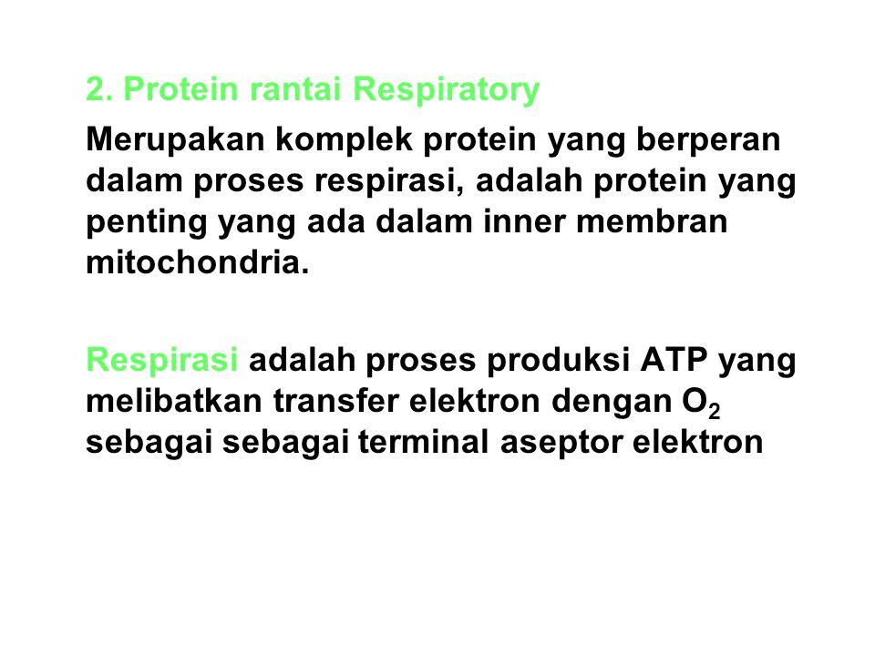 2. Protein rantai Respiratory