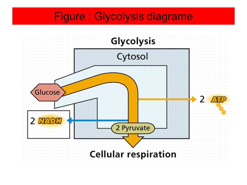 Figure : Glycolysis diagrame
