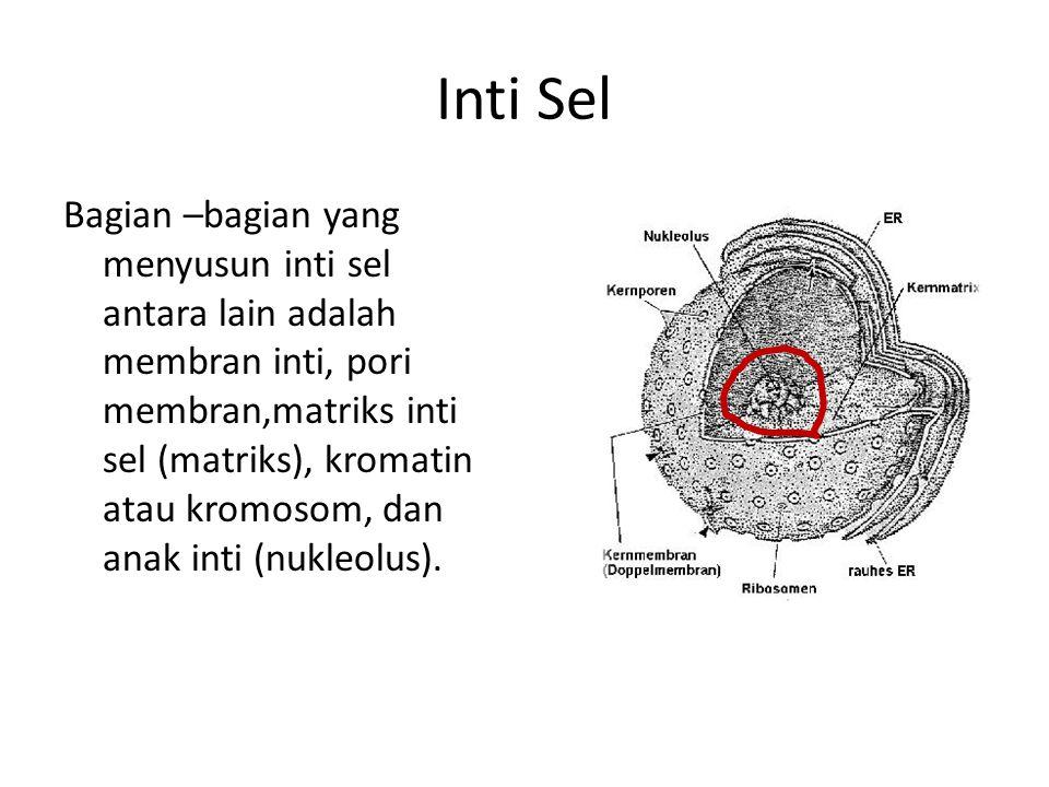 Inti Sel