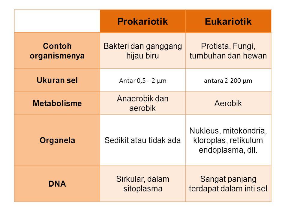 Prokariotik Eukariotik