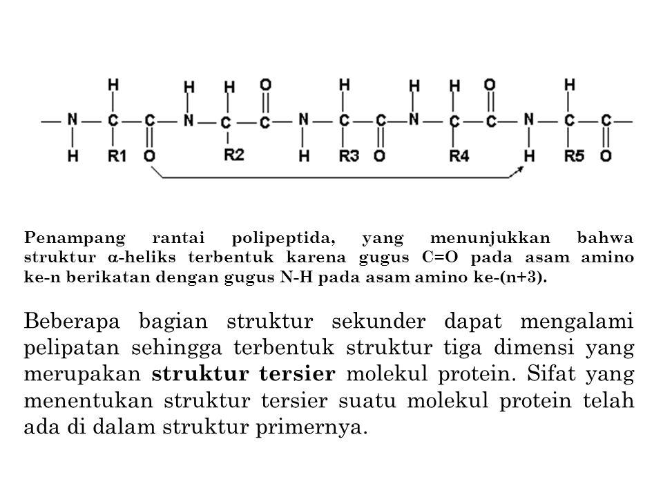 Penampang rantai polipeptida, yang menunjukkan bahwa struktur -heliks terbentuk karena gugus C=O pada asam amino ke-n berikatan dengan gugus N-H pada asam amino ke-(n+3).
