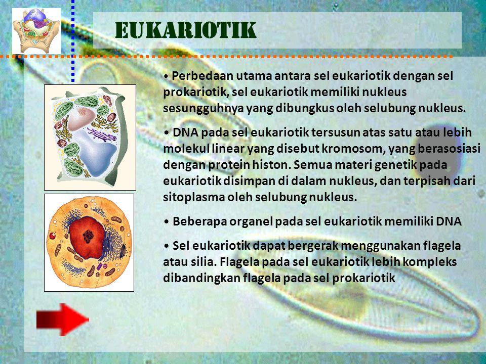 EUKARIOTIK