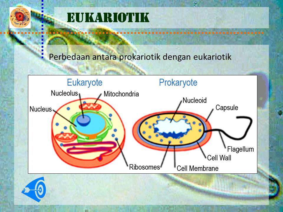Perbedaan antara prokariotik dengan eukariotik