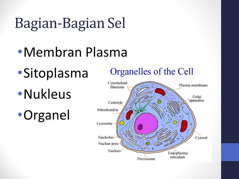 Bagian-Bagian Sel Membran Plasma Sitoplasma Nukleus Organel