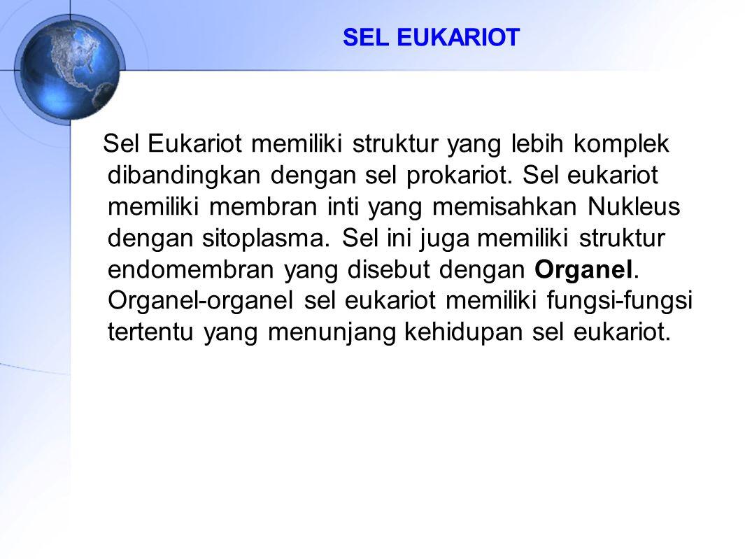 SEL EUKARIOT