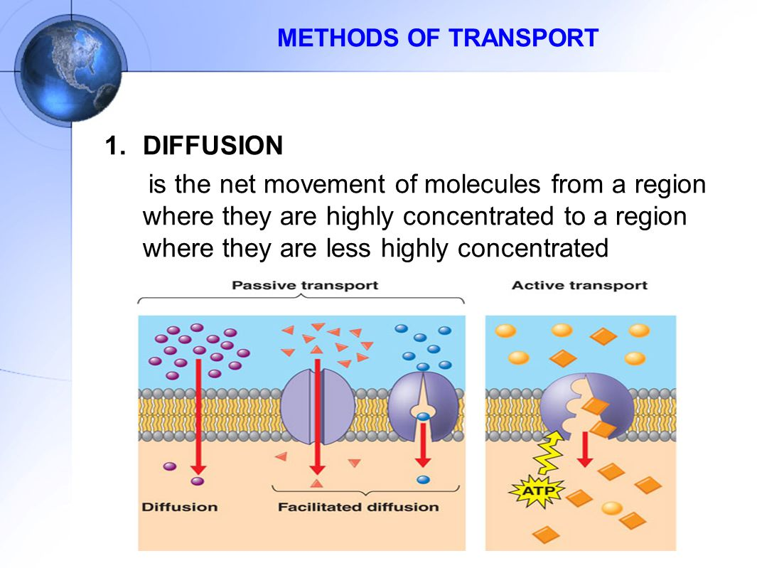 METHODS OF TRANSPORT DIFFUSION.