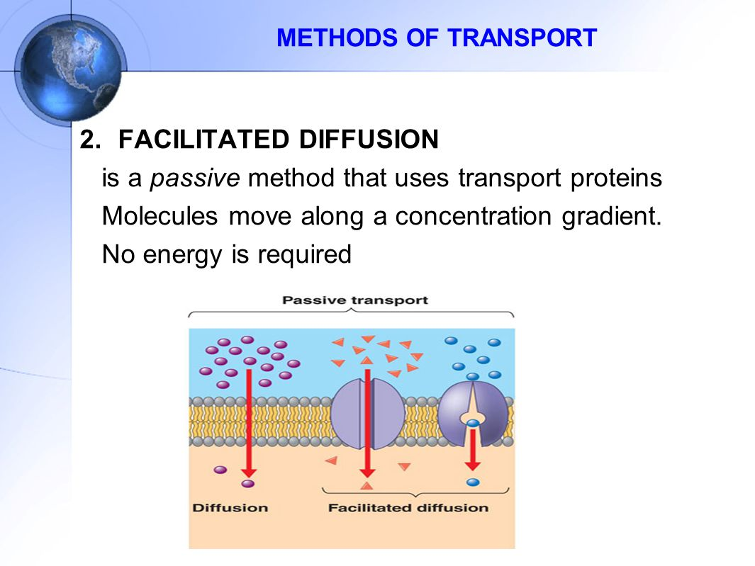 FACILITATED DIFFUSION is a passive method that uses transport proteins