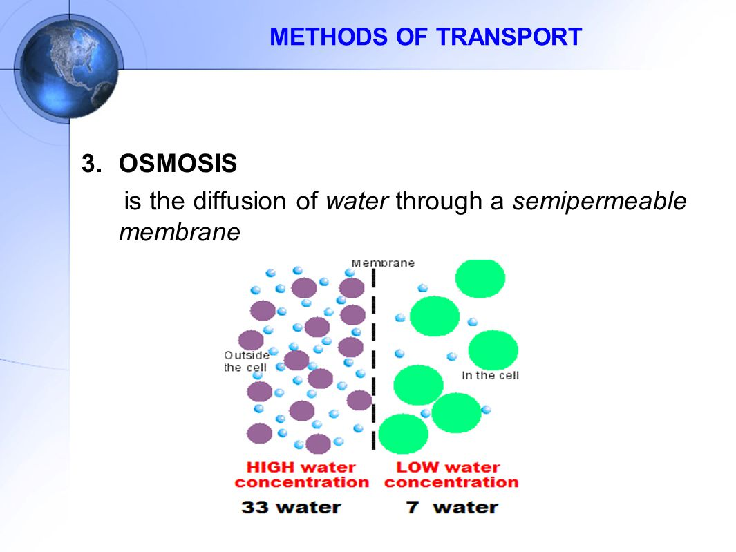 is the diffusion of water through a semipermeable membrane