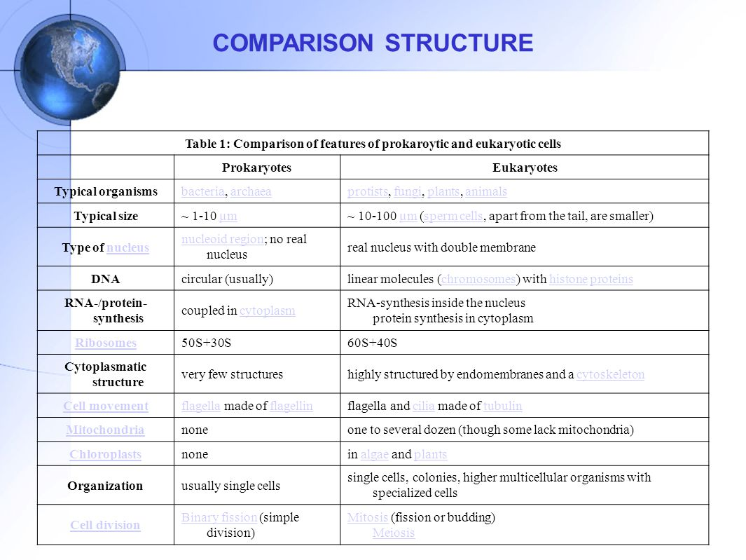 COMPARISON STRUCTURE Table 1: Comparison of features of prokaroytic and eukaryotic cells. Prokaryotes.