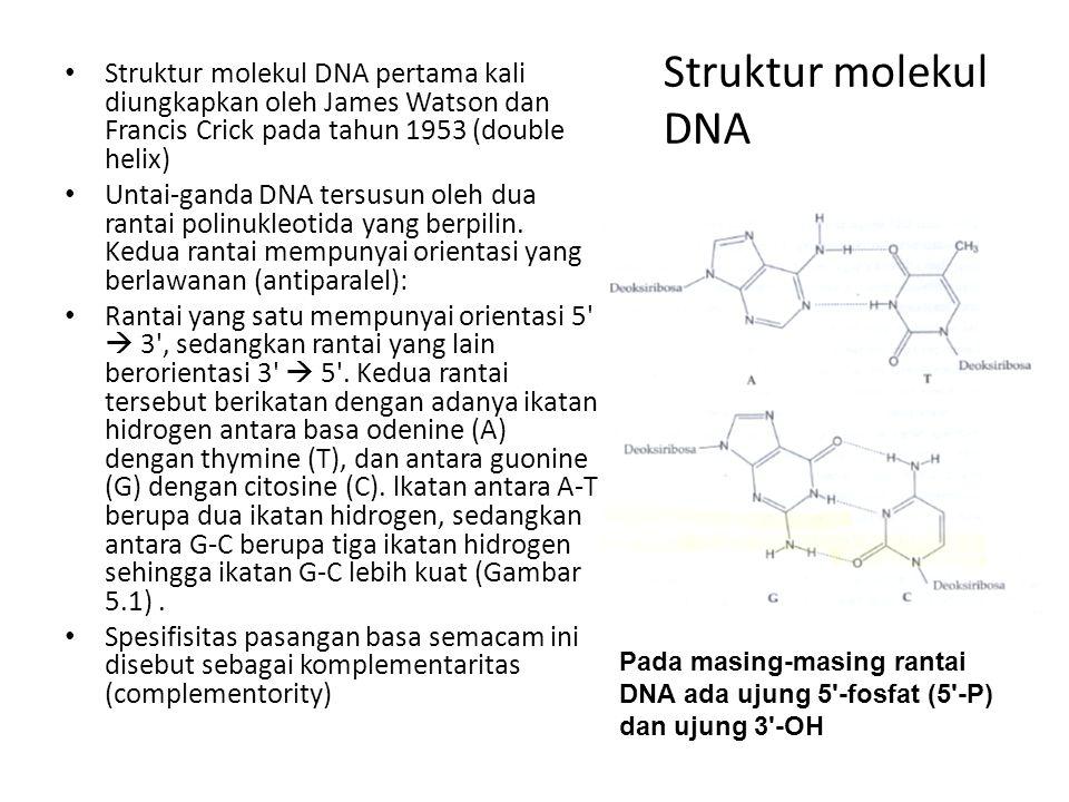 Struktur molekul DNA Struktur molekul DNA pertama kali diungkapkan oleh James Watson dan Francis Crick pada tahun 1953 (double helix)