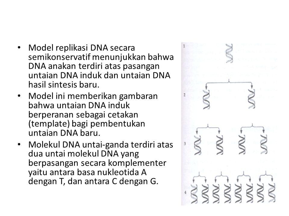 Model replikasi DNA secara semikonservatif menunjukkan bahwa DNA anakan terdiri atas pasangan untaian DNA induk dan untaian DNA hasil sintesis baru.