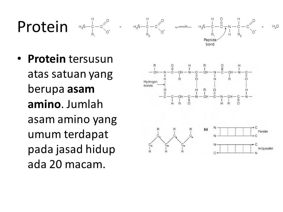 Protein Protein tersusun atas satuan yang berupa asam amino.