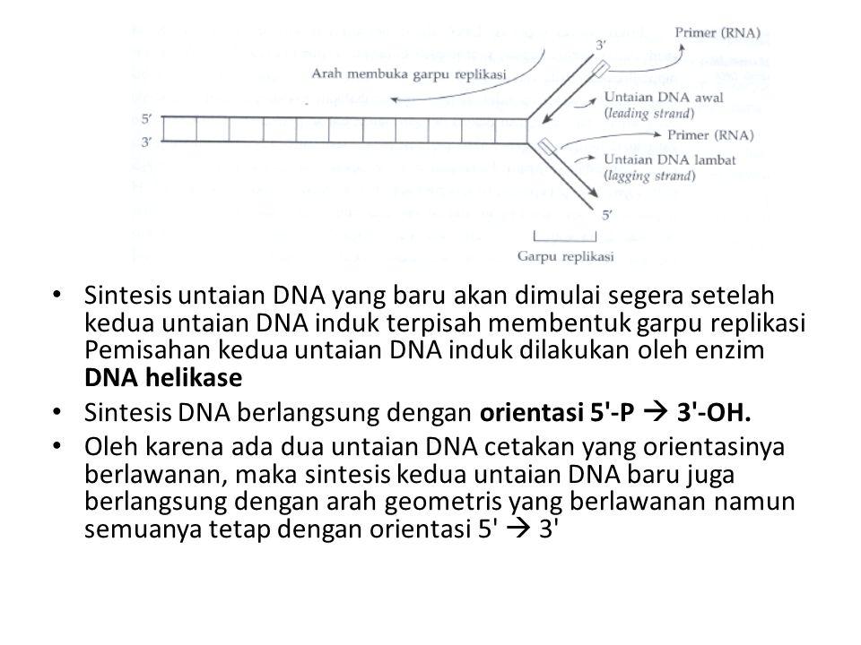 Sintesis untaian DNA yang baru akan dimulai segera setelah kedua untaian DNA induk terpisah membentuk garpu replikasi Pemisahan kedua untaian DNA induk dilakukan oleh enzim DNA helikase