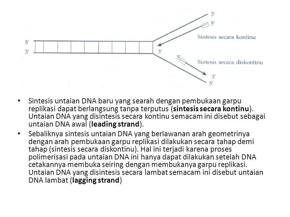 Sintesis untaian DNA baru yang searah dengan pembukaan garpu replikasi dapat berlangsung tanpa terputus (sintesis secara kontinu). Untaian DNA yang disintesis secara kontinu semacam ini disebut sebagai untaian DNA awal (leading strand).