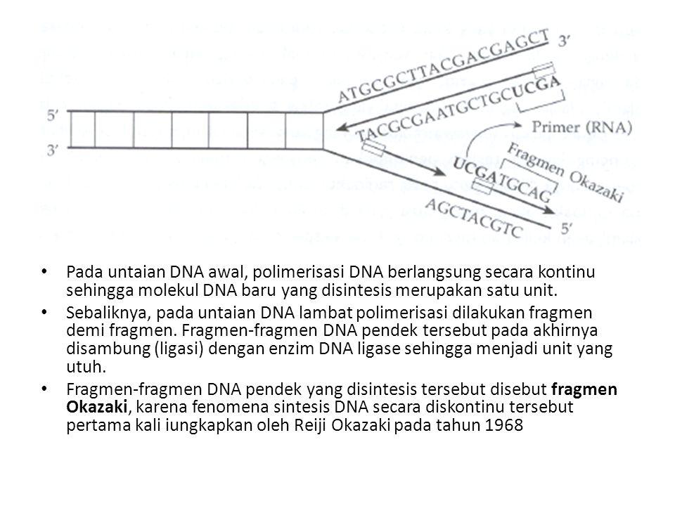 Pada untaian DNA awal, polimerisasi DNA berlangsung secara kontinu sehingga molekul DNA baru yang disintesis merupakan satu unit.