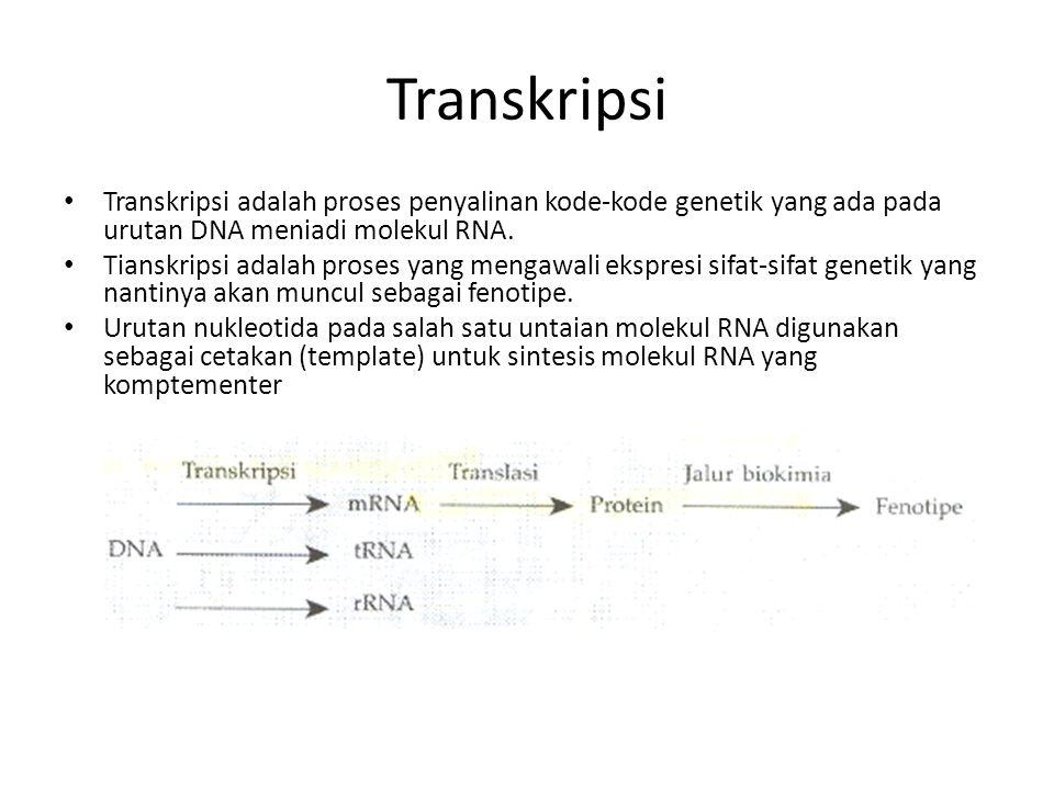 Transkripsi Transkripsi adalah proses penyalinan kode-kode genetik yang ada pada urutan DNA meniadi molekul RNA.