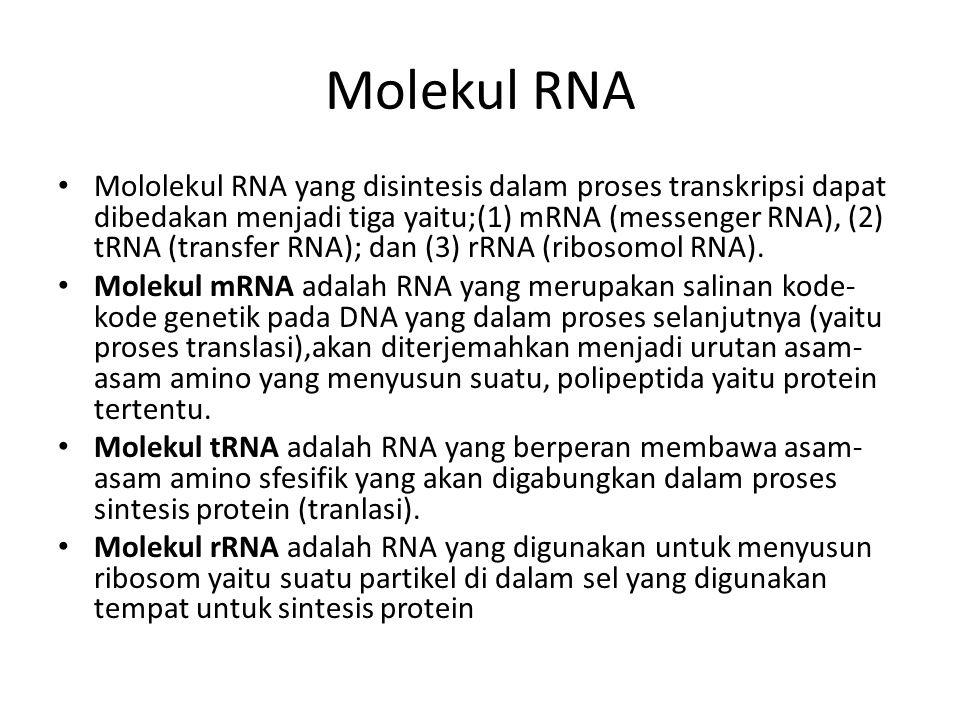 Molekul RNA