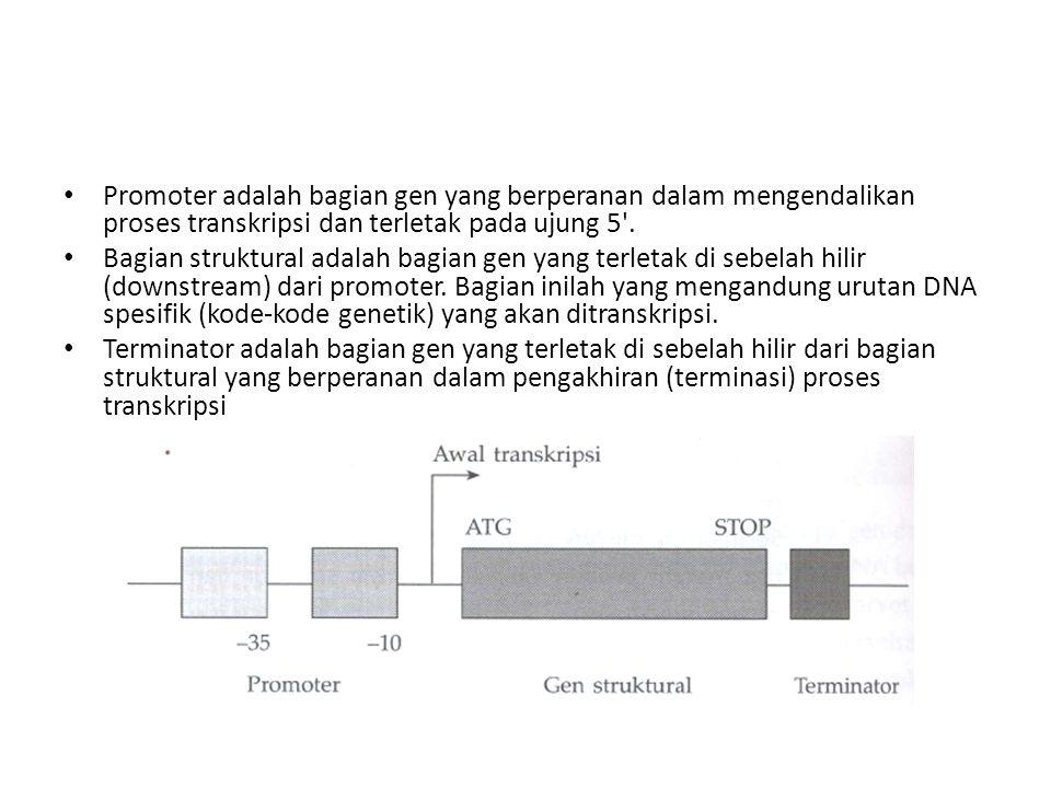 Promoter adalah bagian gen yang berperanan dalam mengendalikan proses transkripsi dan terletak pada ujung 5 .