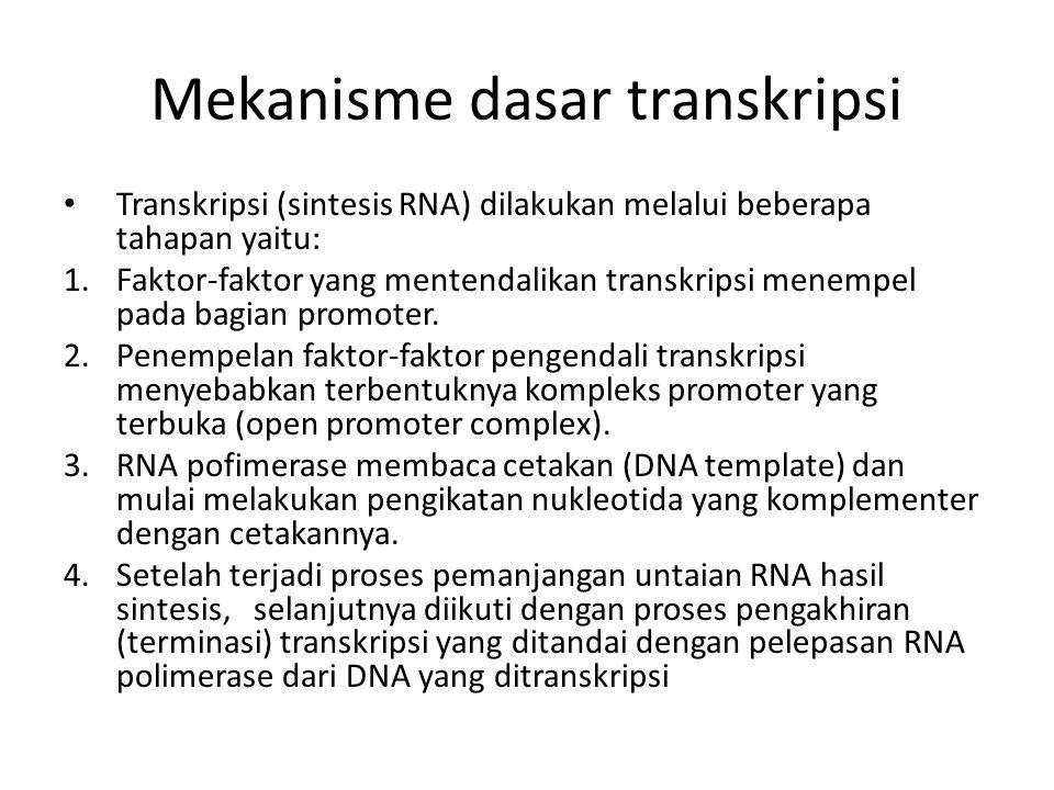 Mekanisme dasar transkripsi