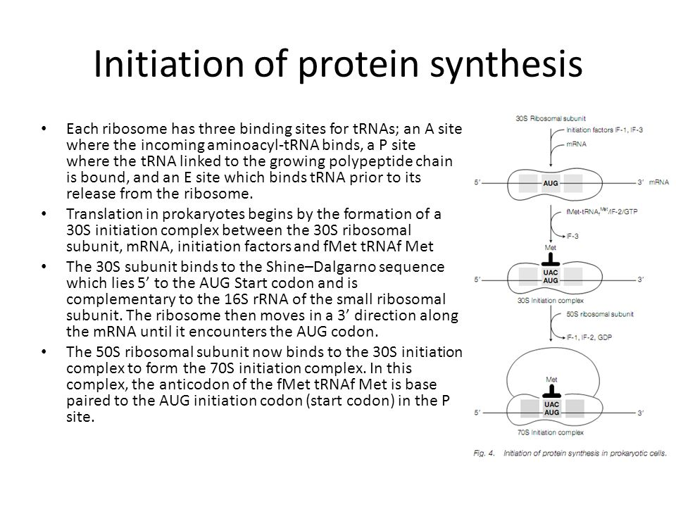 Initiation of protein synthesis